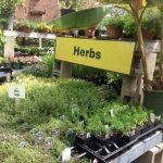somerville-spring-herbs-rickys-union-square