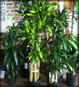 Matelic image indoor tropical plant identification - Good flowering house plants ...